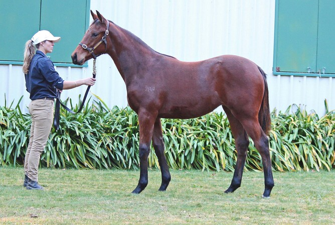 Lot 64 Shooting To Win x Sotela filly