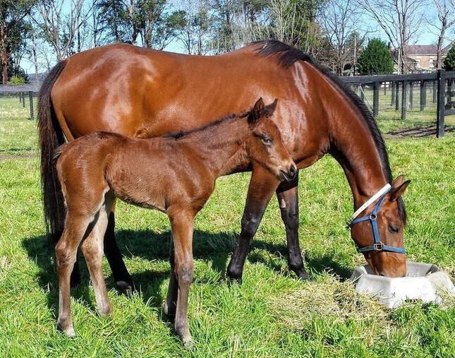 Sotela pictured with her Shooting To Win filly as a foal at Tyreel Stud