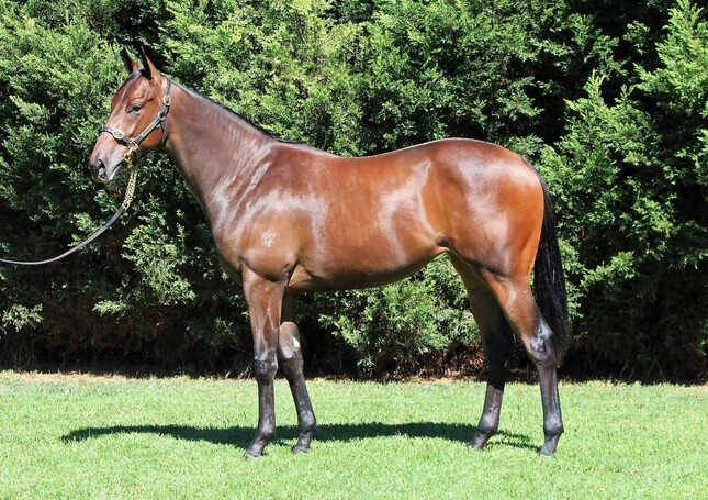 Lot 1 Redoute's Choice x A Real Princess filly