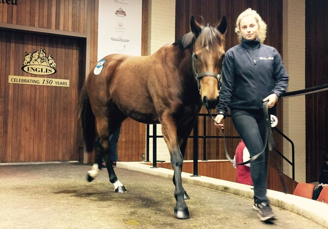 Ella Supero, purchased by Lime Country Thoroughbreds - Photo: @vicbreeders (Twitter)