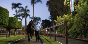 2018 Magic Millions National Broodmare Sale - 29,30,31 May & 1 June, 2018